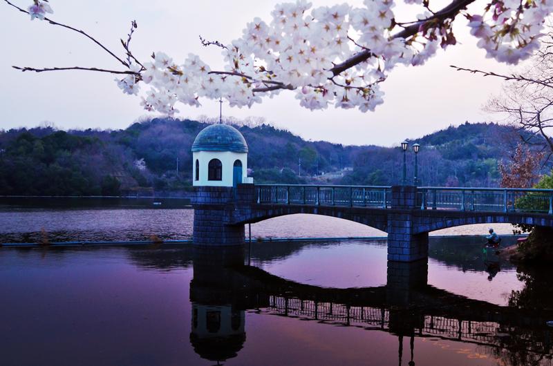 服部大池の桜